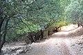 Covered Dishon River track.JPG