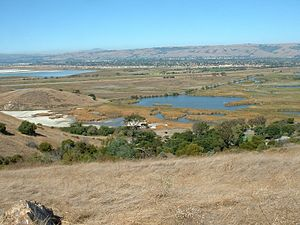 Coyote Hills Regional Park - View across wetlands of the Coyote Hills park from the hills
