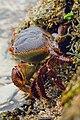 Crab in Tanzania.jpg