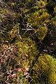 Cranesville Swamp Preserve 81.JPG