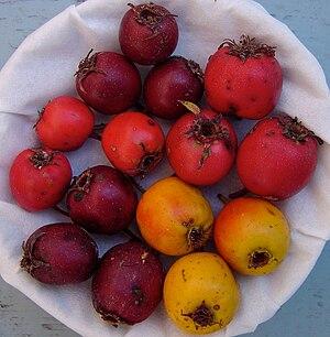 Crataegus punctata - Image: Crataegus punctata fruits
