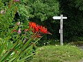 Crocosmia at Coldharbour - geograph.org.uk - 1403174.jpg