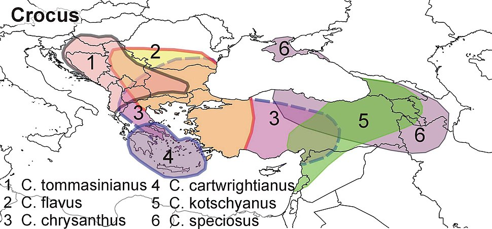 Crocus distribution map balkan and minor asia