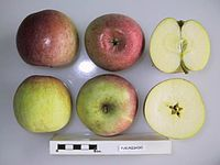 Cross section of Fukunishiki, National Fruit Collection (acc. 1953-001).jpg