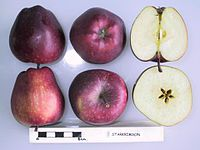 Cross section of Starkrimson (LA 72A), National Fruit Collection (acc. 1979-188).jpg