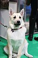 Crufts 2019- NEC, Birmingham- 08-March 2019 - 47331270701.jpg