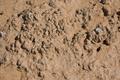Cryptobiotic soil crust in Natural Bridges National Monument near Sipapu 20100906 - number 3.png