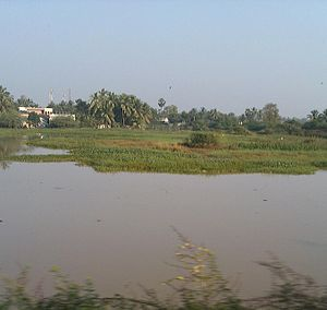 Cyclone Nilam - Floods in agricultural fields after Nilam hit Andhra Pradesh