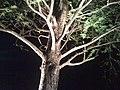 Cypress - panoramio (2).jpg