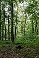 Dülmen, Naturschutzgebiet -Franzosenbach- -- 2014 -- 0035.jpg
