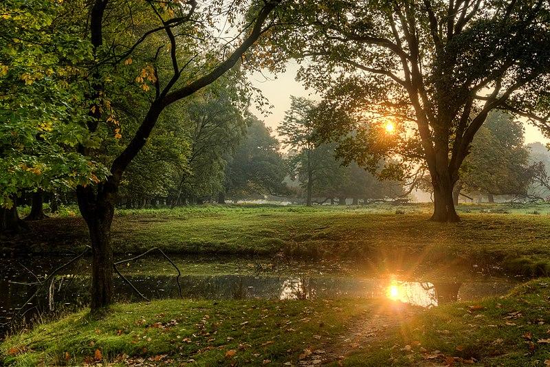 File:Dülmen, Wildpark -- 2015 -- 8871-7.jpg
