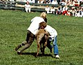 Dülmen, Wildpferdefang 1982 -- 2010 -- 1.jpg