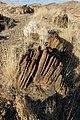 DSC03024 - NAMIBIA 2010 (32145523011).jpg