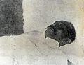 Death of Miguel Malvar.jpg