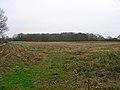 Decoy Wood - geograph.org.uk - 152279.jpg