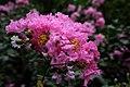 Deer Park Pink Flowers.jpg