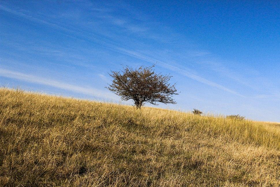 Deliblatska peščara i drvo