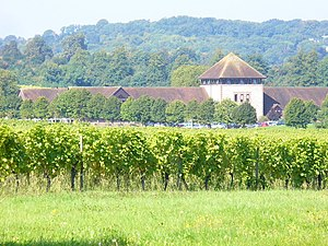 Denbies Wine Estate - The vineyard, looking towards the visitor centre