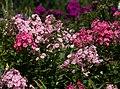 Denver Botanic Gardens (3855016578).jpg