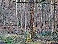 Der Distriktstein (4) wurde 1952 erstellt unter der Leitung von Forstmeister Knödler - panoramio.jpg