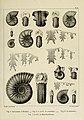 Description des mollusques fossiles qui se trouvent dans les grès verts des environs de Genève (9525361468).jpg
