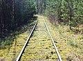 Dessau-Wörlitzer Eisenbahn im Biosphärenreservat Mittlere Elbe bei Oranienbaum-Wörlitz - panoramio (4).jpg