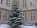Det store juletræ foran hovedindgangen - Museum Christmans tree 2010 (5210775881) (2).jpg