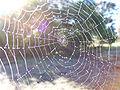 Dewy spider web.jpg