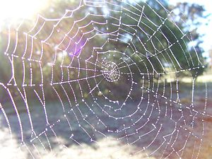 Indra's net - Image: Dewy spider web