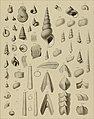 Die Versteinerungen des rheinischen Schichtensystems in Nassau. Mit einer kurzgefassten Geognosie dieses Gebietes und mit steter Berücksichtigung analoger Schichten anderer Lander (1850) (14597549898).jpg