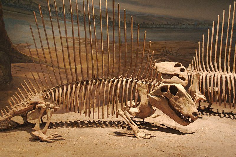 Ученые доказали, что динозавры вымерли оттемноты ихолода