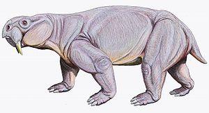 Dinodontosaurus - Image: Dinodontosaurus 1DB