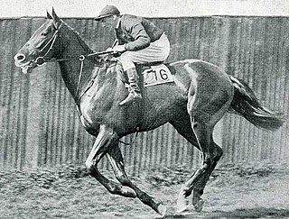 Diophon British-bred Thoroughbred racehorse