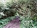 Disused railway line - geograph.org.uk - 439157.jpg