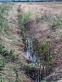 Ditch along Carr Lane, Bonby - geograph.org.uk - 494567.jpg