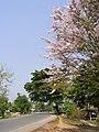 Doi Cham Pi - panoramio - CHAMRAT CHAROENKHET (2).jpg