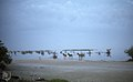 Donkeys think better of it. Long Cay camp. Inagua (27093916269).jpg