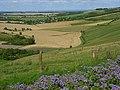 Downland, Letcombe Bassett - geograph.org.uk - 510970.jpg