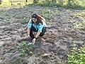 Dr. Laura M Boykin in a cassava field.jpg