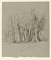 Drawing, Cypress Trees of Chapultepec, Mexico, March 14, 1892 (CH 18369091).jpg