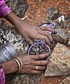 Dried Dragons Blood, Socotra Island (10099129506).jpg