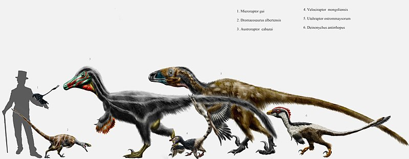 Dromaeosaurid parade by durbed.jpg