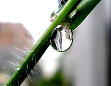 Droplet on plant stem.jpg