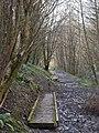 Duckboards, Hollycroft Wood - geograph.org.uk - 1777370.jpg