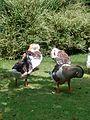 Ducks 7.jpg