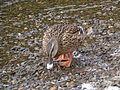 Ducks Upper Lake 06.JPG