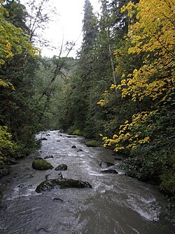Dungeness River - Olympic National Forest - October 2017.jpg