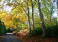 Dunrobin Castle driveway - geograph.org.uk - 1030913.jpg