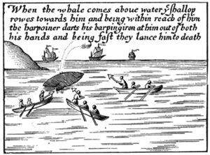 Two flue harpoon - An engraving showing a two flue harpoon used in whaling