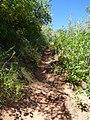 East Rim Trail - panoramio (4).jpg